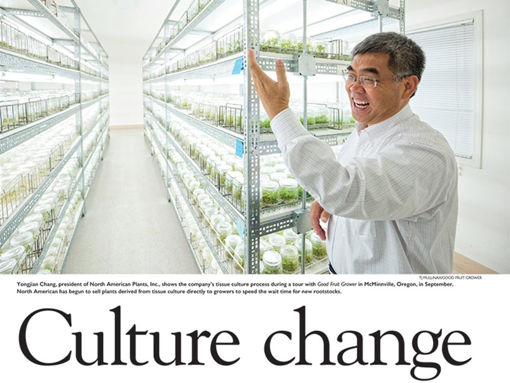 Pages: Culture Change centerpiece