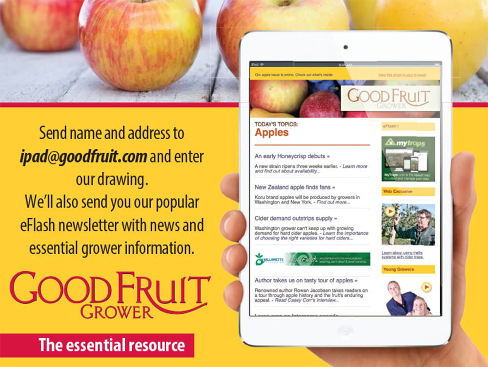 Marketing collateral: iPad contest one sheet