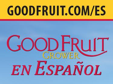 Marketing Collateral: Popup Banner for GFG en Español